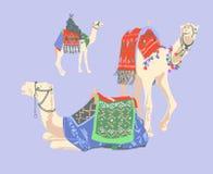 Camello egipcio adornado con las alfombras y los ornamentos brillantes libre illustration