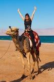 Camello Egipto del viaje Fotografía de archivo