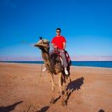 Camello Egipto del viaje Fotos de archivo libres de regalías