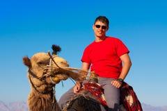 Camello Egipto del viaje Imagen de archivo