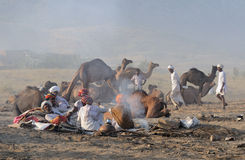 Camello el noviembre de 2009 justo - 2 de Puskar fotografía de archivo libre de regalías