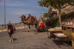 Camello en Cappadocia Turquía, Uchisar Entretenimiento y vacaciones en Cappadocia Turquía Éste es camello tradicional del montar  fotografía de archivo