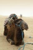Camello en desierto Fotos de archivo