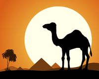 Camello en desierto Foto de archivo libre de regalías