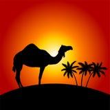 Camello en el fondo de la puesta del sol stock de ilustración