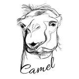 Camello en estilo gráfico Fotografía de archivo libre de regalías