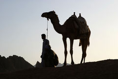 Camello en puesta del sol Fotos de archivo
