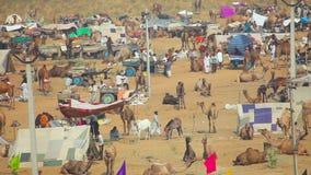 Camello justo almacen de metraje de vídeo