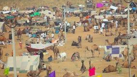 Camello justo metrajes