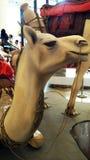 Camello lindo imagen de archivo libre de regalías