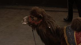 Camello almacen de video