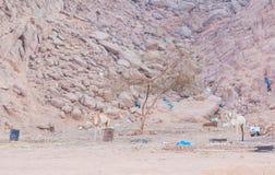 Camello que se coloca en el desierto en la ruina del fondo fotos de archivo