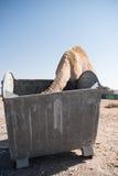 Camello salvaje que come fuera de un contenedor de la basura en el Oriente Medio Fotografía de archivo libre de regalías
