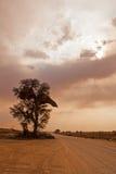 Camello Thorn Tree del borde de la carretera Foto de archivo