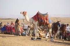 Camello y beduino Fotografía de archivo