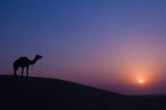 Camello y paisaje Fotos de archivo