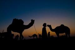 Camellos con el hombre en la salida del sol fotos de archivo libres de regalías