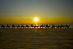 Camellos de Broome Fotografía de archivo