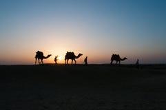 Camellos de la silueta en el desierto de Thar Fotografía de archivo