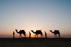 Camellos de la silueta en el desierto de Thar Imagen de archivo libre de regalías