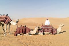 Camellos en desierto fotos de archivo libres de regalías