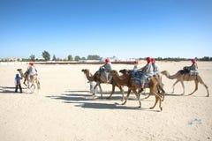Camellos en la línea Imágenes de archivo libres de regalías