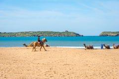 Camellos en la playa en Essaouira Fotos de archivo libres de regalías