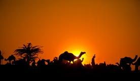 Camellos en la puesta del sol fotos de archivo