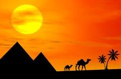 Camellos en la puesta del sol Fotos de archivo libres de regalías