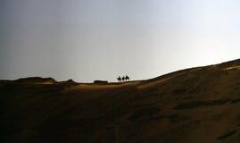 Camellos en un desierto Fotos de archivo