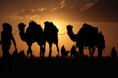 Camellos en un desierto Imágenes de archivo libres de regalías