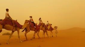Camellos en una tempestad de arena foto de archivo libre de regalías