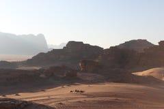 Camellos en Wadi Rum fotos de archivo