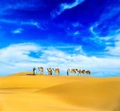 Camellos. Paisaje del desierto Imagen de archivo libre de regalías