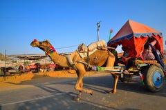 Camellos que arrastran un carro en el camino Imagen de archivo libre de regalías