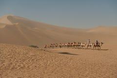 Camellos que vuelven al campo en las dunas de arena de Mingsha Imagen de archivo libre de regalías