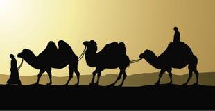 Camellos y beduinos en desierto