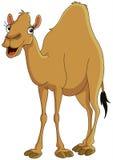Camelo Foto de Stock