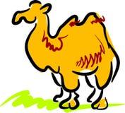 Camelo Ilustração Royalty Free