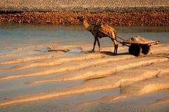 Camelo com o carro pelo rio Fotos de Stock Royalty Free