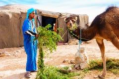 Camelo de alimentação do homem do Berber no deserto foto de stock royalty free
