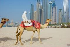 Camelo de Dubai no scape da cidade imagem de stock