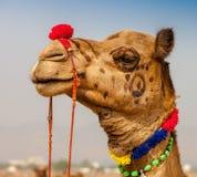 Camelo decorado na feira de Pushkar - Índia fotos de stock