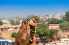 Camelo decorado na feira de Pushkar - Índia foto de stock