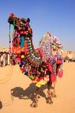 Camelo decorado no festival do deserto, Jaisalmer, Índia Fotografia de Stock