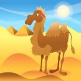 Camelo dos desenhos animados em Sahara Dessert ilustração royalty free