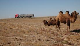 Camelo e caminhão fotos de stock royalty free