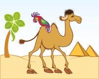 Camelo e papagaio dos desenhos animados ilustração royalty free