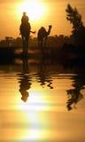 Camelo e reflexão Imagem de Stock Royalty Free