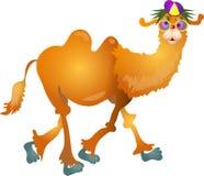 Camelo fresco ilustração stock